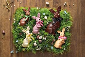 Nico the Easter bunny